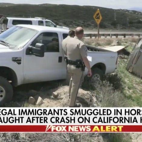 CALIFORNIA CHAOS: Horse Trailer SMUGGLING 19 Immigrants CRASHES near San Diego