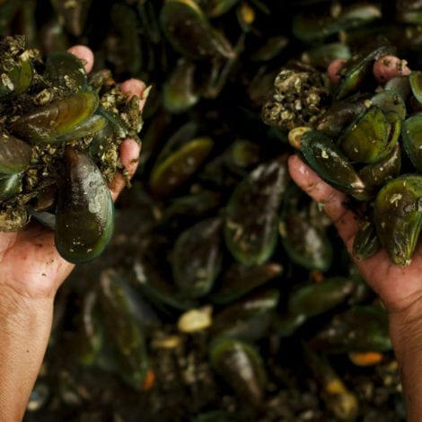 REPORT: Seattle Mussels Test Positive for OPIOIDS