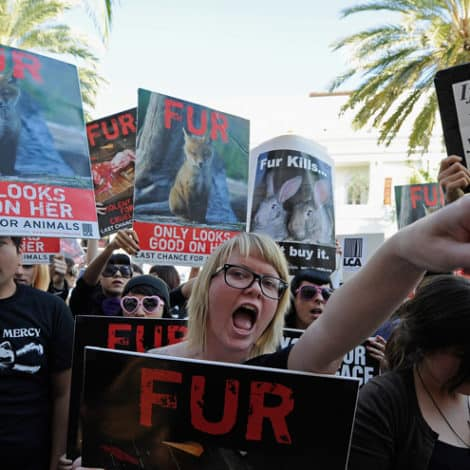 LIBERAL PRIORITIES: LA Considers Ban of 'ALL FUR PRODUCTS' as Homeless Population Soars