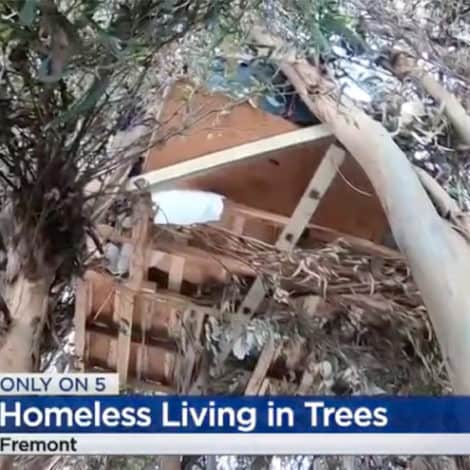 CALIFORNIA NIGHTMARE: San Francisco's Homeless 'Living in Trees' Across the Bay Area