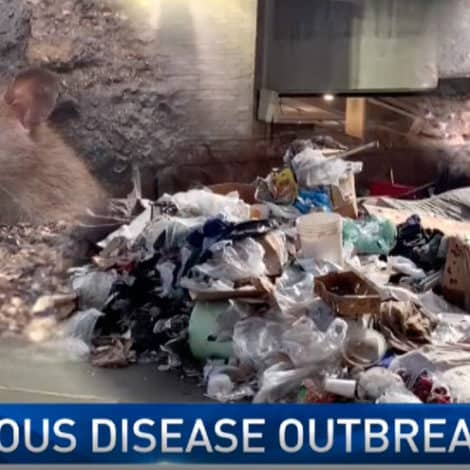 RAT CITY: LAPD Officers Diagnosed with Typhus, Other Diseases Linked to Massive Rat Infestation