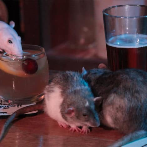 RAT CAPITAL: 'Rat Infested Bar' to Open in the Heart of San Francisco's Tourist District