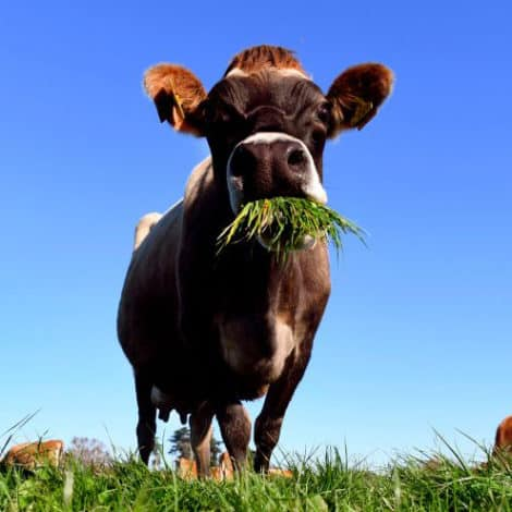 GREEN NEW MEAL: UN Scientists Say 'Rich Countries' Should 'Eat Less Meat' to Protect Environment