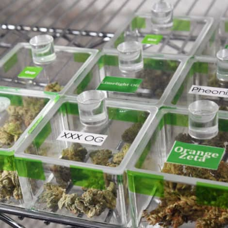 HIGH TIMES: Marijuana Use Among College Students Hits Highest Level in 35 Years