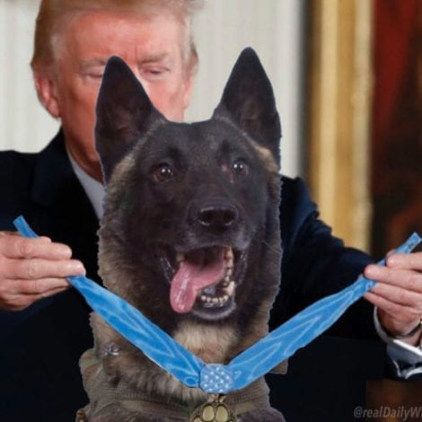 DOGTORED PHOTO: Trump Posts Hilarious Pic Honoring K9 Hero that Took-Out Terror Mastermind