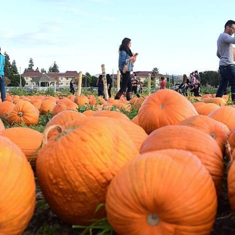 Tax Everything! New Jersey Government Confirms 'Decorative Pumpkins' Now Subject to Taxation