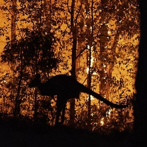 AUSTRALIA BURNING: Officials Charge Nearly 200 with Arson, Looting as Wildfires Rage