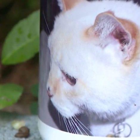 MEET MR. CODY TIMS: Deceased Cat That Died 12 Years Ago Receives Voter Application in Atlanta